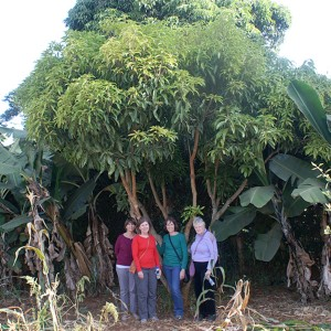 (Left to Right) Sharon Roelke, Lindy Thomas, Marian Griffin and Ann Rosser of Bridges International Development visited a tree planted by Ann Morell during one of her trips to Kenya.